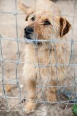 picture of stray dog  - Stray dog behind the corral of a dog refuge - JPG
