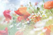 stock photo of poppy flower  - Abstract floral background with poppies - JPG