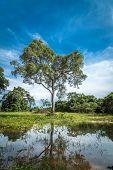 picture of wetland  - Wetlands in Pantanal - JPG