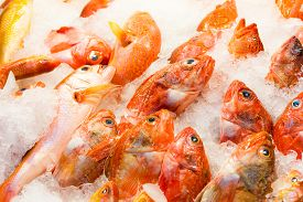 image of red snapper  - Red snapper fish in market - JPG