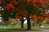pic of foursome  - Golf course with autumn leaves on trees with fountain - JPG