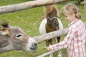 picture of wild donkey  - Little girl feeding donkey - JPG