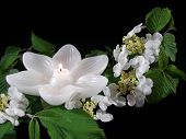 pic of funeral  - Lotus candle surrounded by white wildflowers - JPG