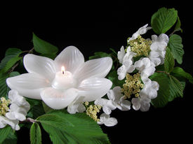 foto of funeral  - Lotus candle surrounded by white wildflowers - JPG