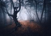 Dark Fog Forest. Mystical Autumn Forest With Trail In Yellow Fog poster