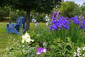 A backyard garden of iris bordering a lawn.