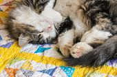 Closeup Of Tabby Tomcat Sleeping On Colourful Quilt Cover With Copy Space poster