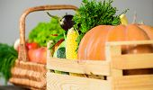 Fall Harvest Concept. Autumn Harvest Organic Crops Pumpkin Corn Vegetables. Vegetables From Garden O poster