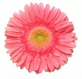 stock photo of single flower  - a beautiful pink flower - JPG