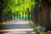 Alley In The Park In Sun Rays. Spring In The Park. A Walking Track. Large Trees And Benches. Walking poster