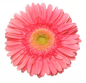 foto of single flower  - a beautiful pink flower - JPG