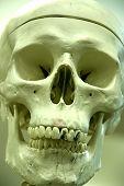 Bonehead Portrait poster