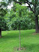 pic of kensington  - The Kensington Gardens and Hide Park - JPG