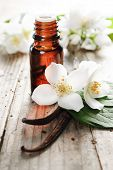stock photo of jasmine  - Essential oil with jasmine flower and vanilla - JPG