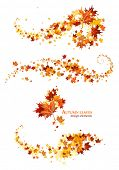 picture of dead plant  - Autumn leaves design elements - JPG
