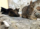 Cats at Naxos island