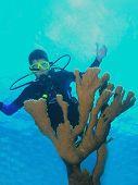 Постер, плакат: Молодые мужчины аквалангист позади Коралл