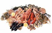 pic of norway lobster  - various seafood in front of white background - JPG