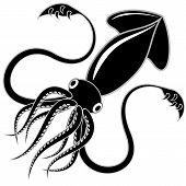 picture of squid  - Black and white vector illustration of a squid - JPG