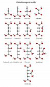 stock photo of tartar  - Chemical formulas of bioorganic acids  - JPG