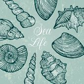 stock photo of cockle shell  - Beautiful background with sea shells - JPG