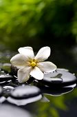 pic of gardenia  - Spa still with gardenia flower on pebbles - JPG