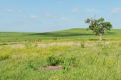 stock photo of tallgrass  - Prairie farm on a sunny day Strong City Kansas - JPG