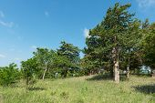 stock photo of prairie  - Trees in a tallgrass prairie Strong City Kansas - JPG