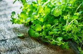 picture of oregano  - oregano on a dark wood background. tinting. selective focus on the right oregano