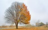 foto of half naked  - Solitary Single Tree in the fall landscape - JPG