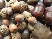 pic of pecan nut  - Delicious nuts - JPG