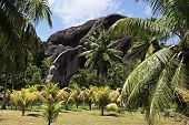 picture of enormous  - Beautiful enormous black granite rocks in a palm grove - JPG