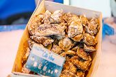 picture of babylonia  - fresh oysters on mediterranean fish market - JPG