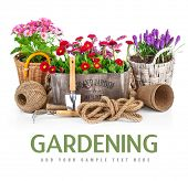 foto of bucket  - Spring flowers in wooden bucket with garden tools - JPG