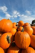 picture of wagon  - A wagon loaded with giant pumpkins sits in the foreground of this photo - JPG