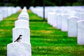 stock photo of arlington cemetery  - Arlington National Cemetery Virginia VA near Washington DC United States - JPG