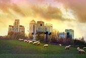 picture of sheep  - London - JPG