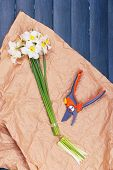 picture of daffodils  - Beautiful daffodils with pruner on paper on wooden table - JPG