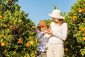 stock photo of mandarin orange  - Smiling happy mother and son harvesting oranges and mandarins at citrus farm - JPG