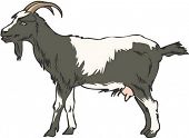 picture of farm animals  - Goat Character - JPG