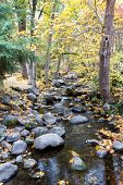 Serene Creek With Large Rocks And A Golden Glow From The Leaves Changing Color In Autumn poster