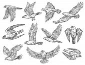 Eagle, Hawk And Falcon Sketches With Flying Birds Of Prey. Vector Predatory Animals Hunting Or Attac poster
