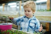 Boy Planting Seeds. Little Boy Planting Seeds In Greenhouse. Boy Planting Seeds To Grow A Tree. Boy  poster