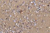 Surface Of Yellow Sea Sand. A Lot Of Colorful Little Seashells On The Sea Sand. Fragments Of White,  poster
