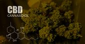 Chemical Formulas Of Elements Thc Cbd In Marijuana Medical Strains poster