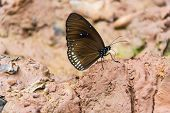 A Butterfly Is On Wet Soil. poster