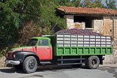 Lorry Load Of Black Grapes For Winemaking