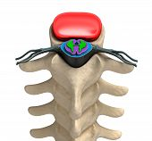 pic of lumbar spine  - Human spine in details - JPG