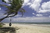 foto of tire swing  - Tire swing hanging from palm tree at tropical beach - JPG