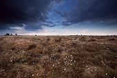 foto of marsh grass  - clouded sky over marsh with cotton - JPG
